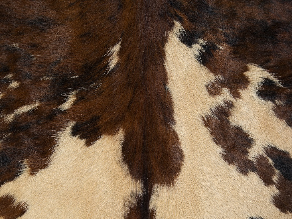 Normand Cow Dyed Beige Part