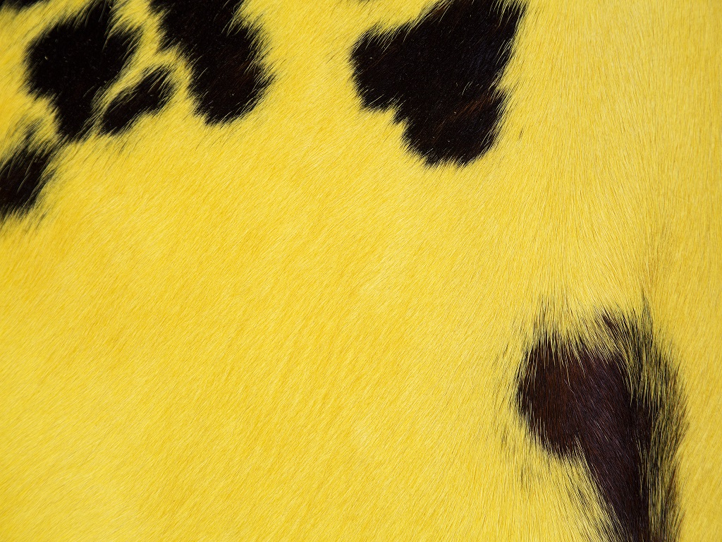 Normand Cow Yellow Part